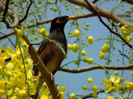Birds and colour everywhere.