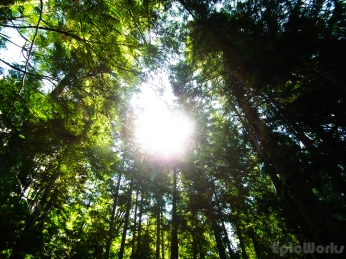 The forest canopy cuts out most of the light