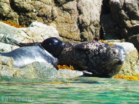 Seals chillin in the sun