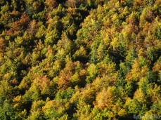The Slovenian forests
