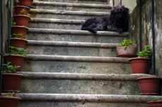 The guardian of the steps.