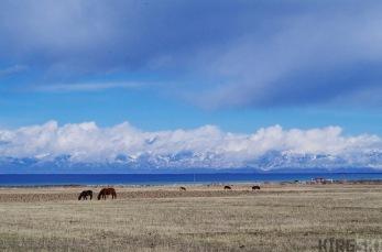 Road A363, Issyk Kul Oblast, Kyrgyzstan. Heading towards the Suek pass we watch the horses grazing in front of Issyk-Kul lake.