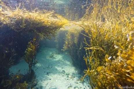 The kelp forests