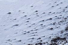 Snow tadpoles