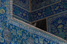 A dove in the Sha's Mosque