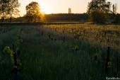 Old vineyards
