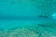 Swimming in Coda Cavallo