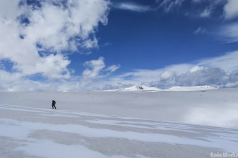 Zebra snow