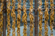 Drying sweetcorn. A new addition to the vast Chinese larder?