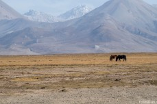 Two horses graze with an impressive back drop behind them