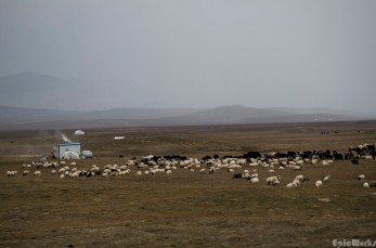 Some small huts and yurts keep the sheperds out of the worst of the weather while their herds graze. The big black dogs do the watching.